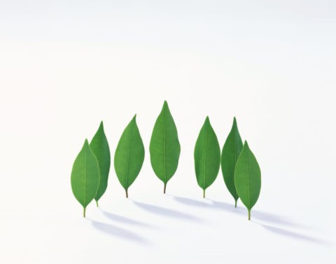 半円に並んで立つ葉