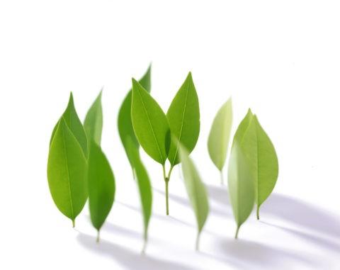 円形に並んで立つ葉