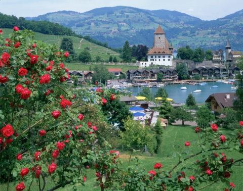 バラの花とトウーン湖