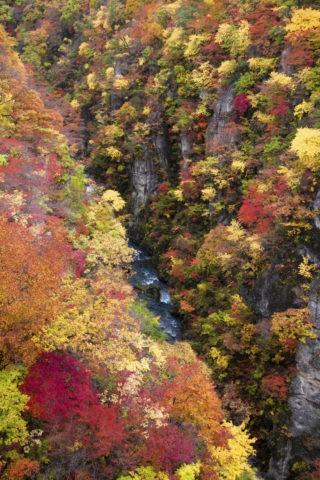 鳴子峡 紅葉の峡谷