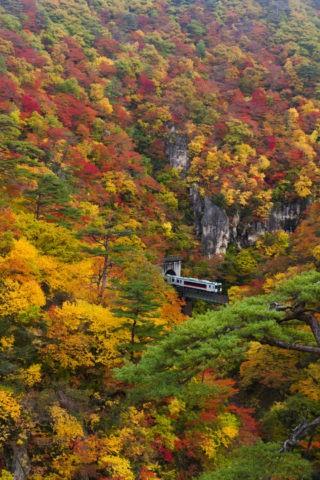 鳴子峡 紅葉と列車