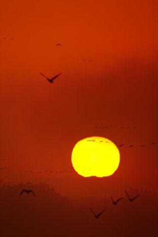 伊豆沼 朝日とマガン