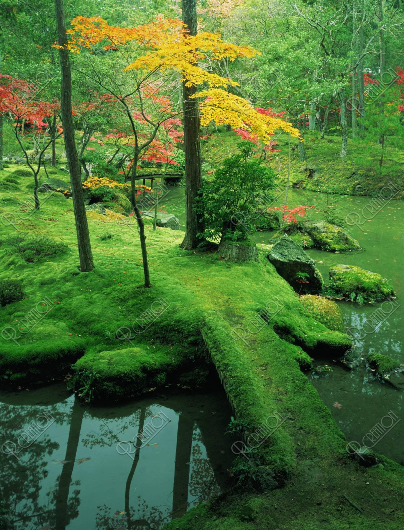 紅葉の西芳寺