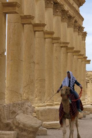 パルミラ遺跡 世界遺産 列柱とラクダ