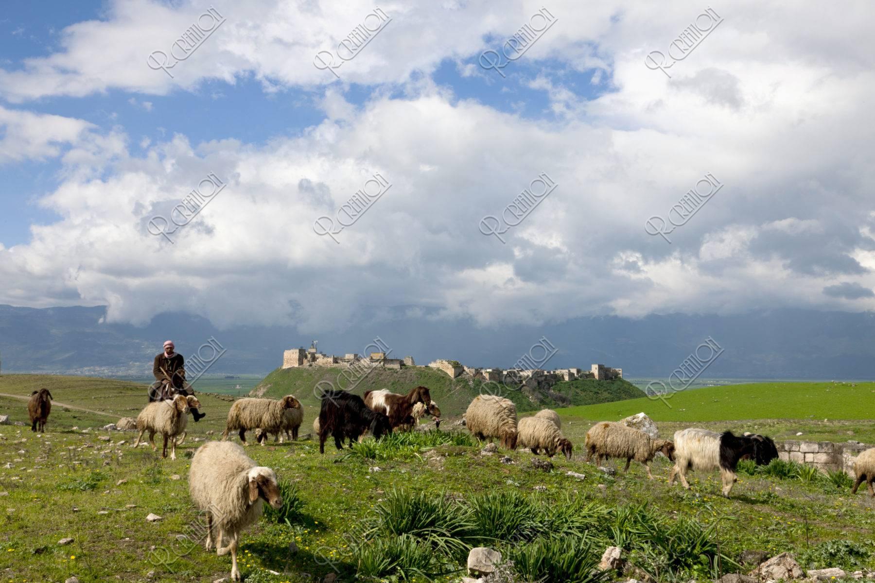 羊とアラブ城