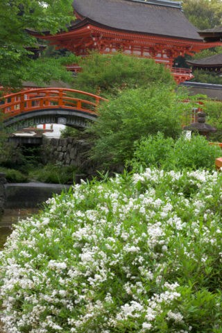 下鴨神社 ウノハナ 世界遺産