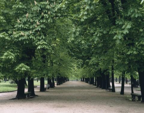 ときの木並木 イタリア