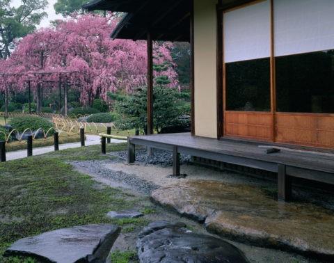 城南宮 楽水苑 桜