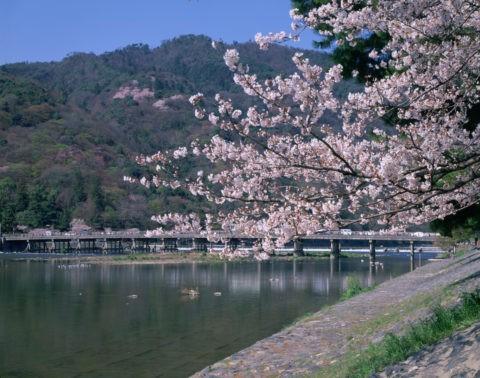 嵐山 渡月橋の桜