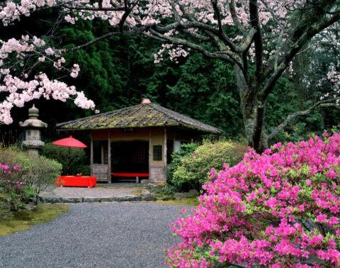白龍園 桜とつつじ