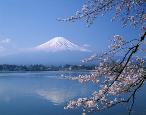 河口湖 桜と富士山