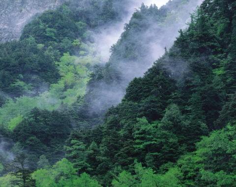 六百山の靄