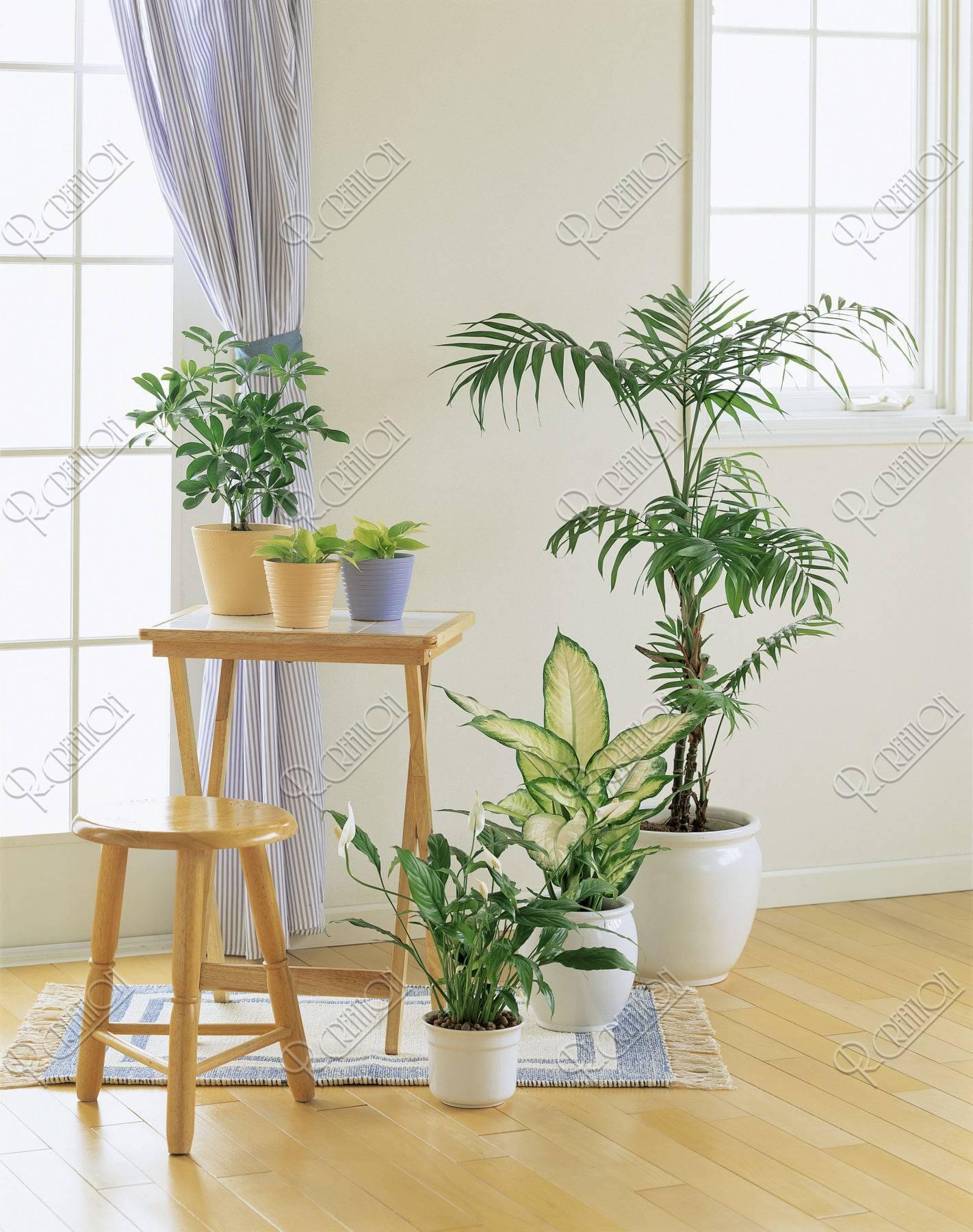 床に置いた観葉植物