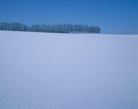 雪原と樹々