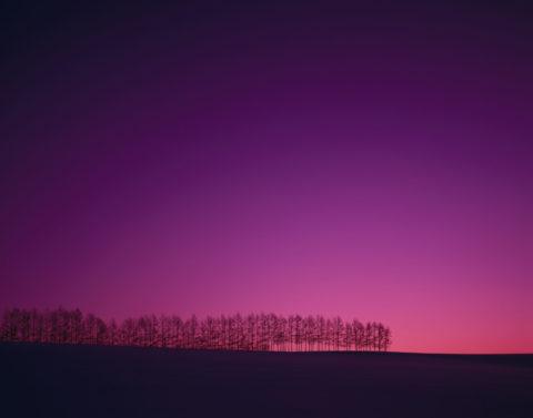 夕照の雪原と樹々