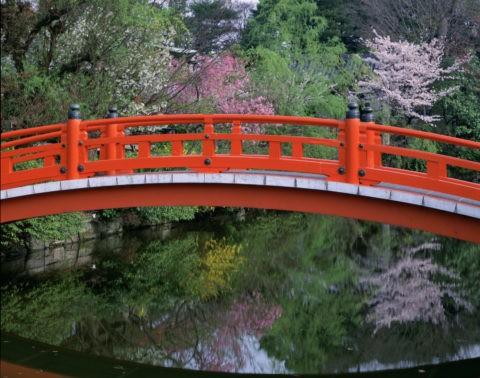 神泉苑と桜
