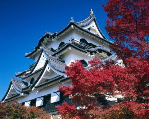 紅葉と彦根城