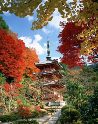 秋の三室戸寺 三重塔