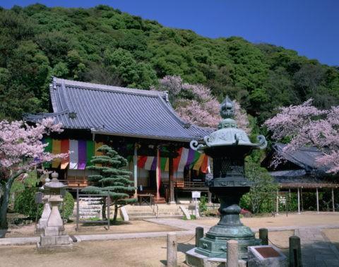 山崎聖天 観音寺と桜