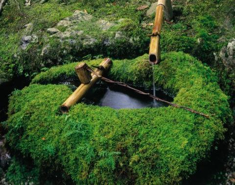 北山 苔むす手水鉢 京都