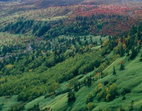 紅葉と芳ヶ平