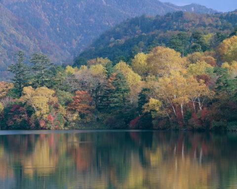 紅葉する中禅寺湖の樹々