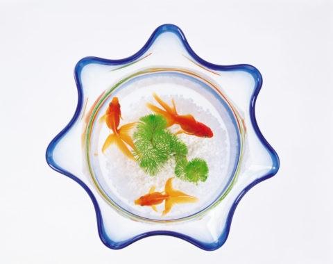 金魚鉢の俯瞰