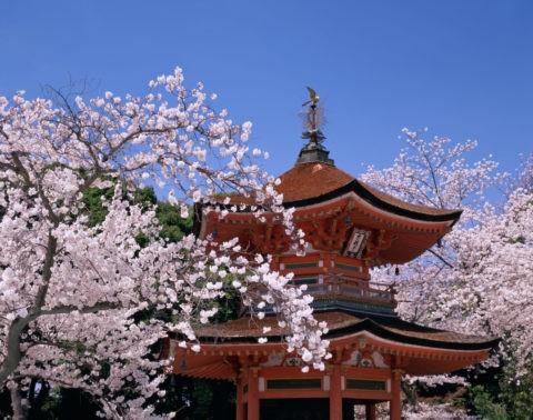 桜と忠魂堂
