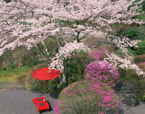 春の白龍園 京都