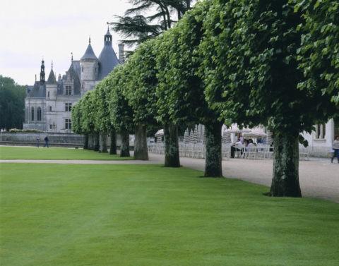 春のシュノンソー城と並木