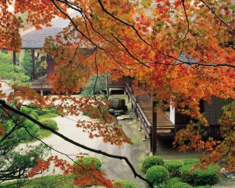 紅葉と庭 曼殊院 京都