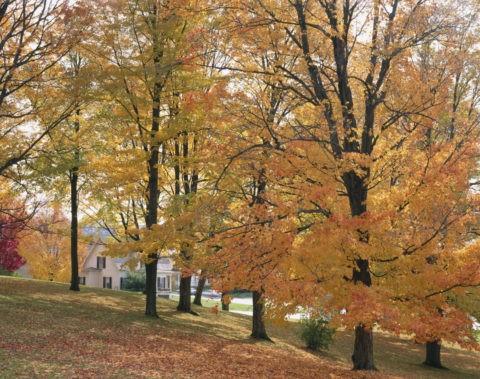 紅葉の丘と家