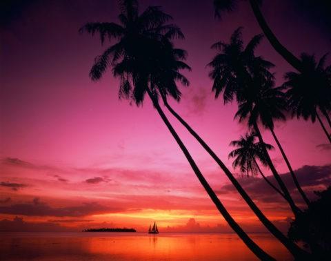 夕照のヤシと海 タヒチ