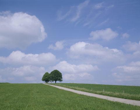 道と樹 フュッセン付近 西ドイツ