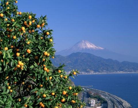 富士と高速道路とミカン