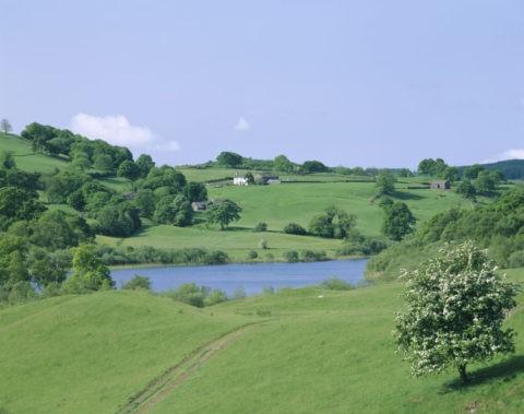 池と樹と白い家