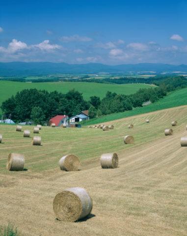 牧草ロールと丘