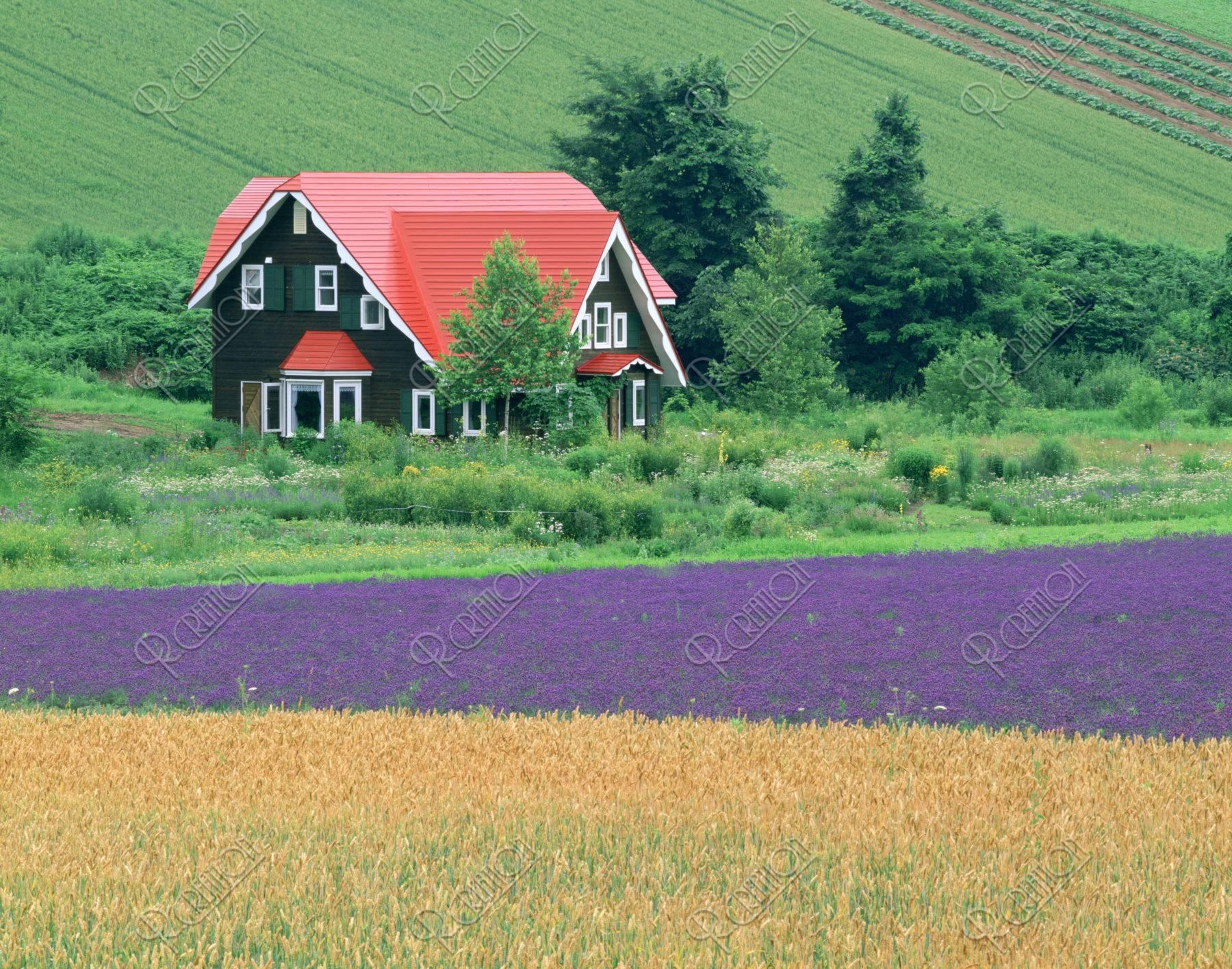 赤い家とラベンダー畑