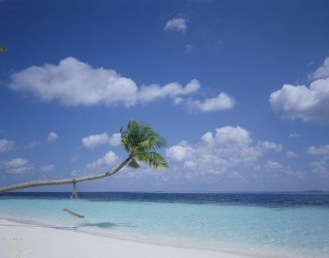 ヤシの浜辺 モルジブ