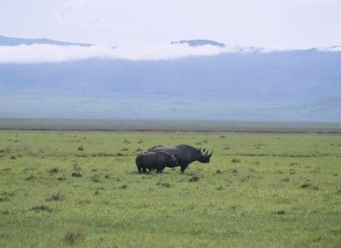 サイ ケニア アンボセリ
