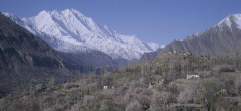 フンザ村のアンズとラカポシ山 パキスタン