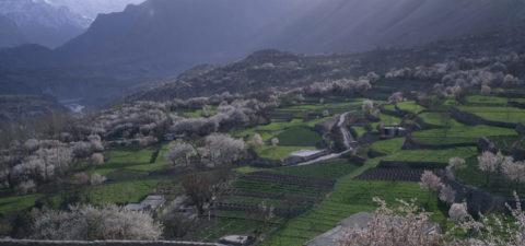 アンズ咲く畑とインダス川支流 パキスタン