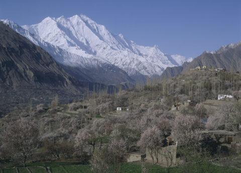 アンズ咲くフンザ村 パキスタン