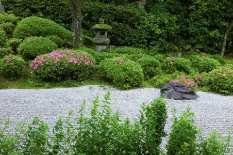 サツキ咲く金福寺