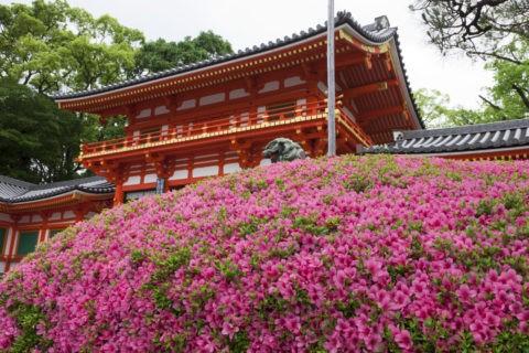 サツキ咲く八坂神社