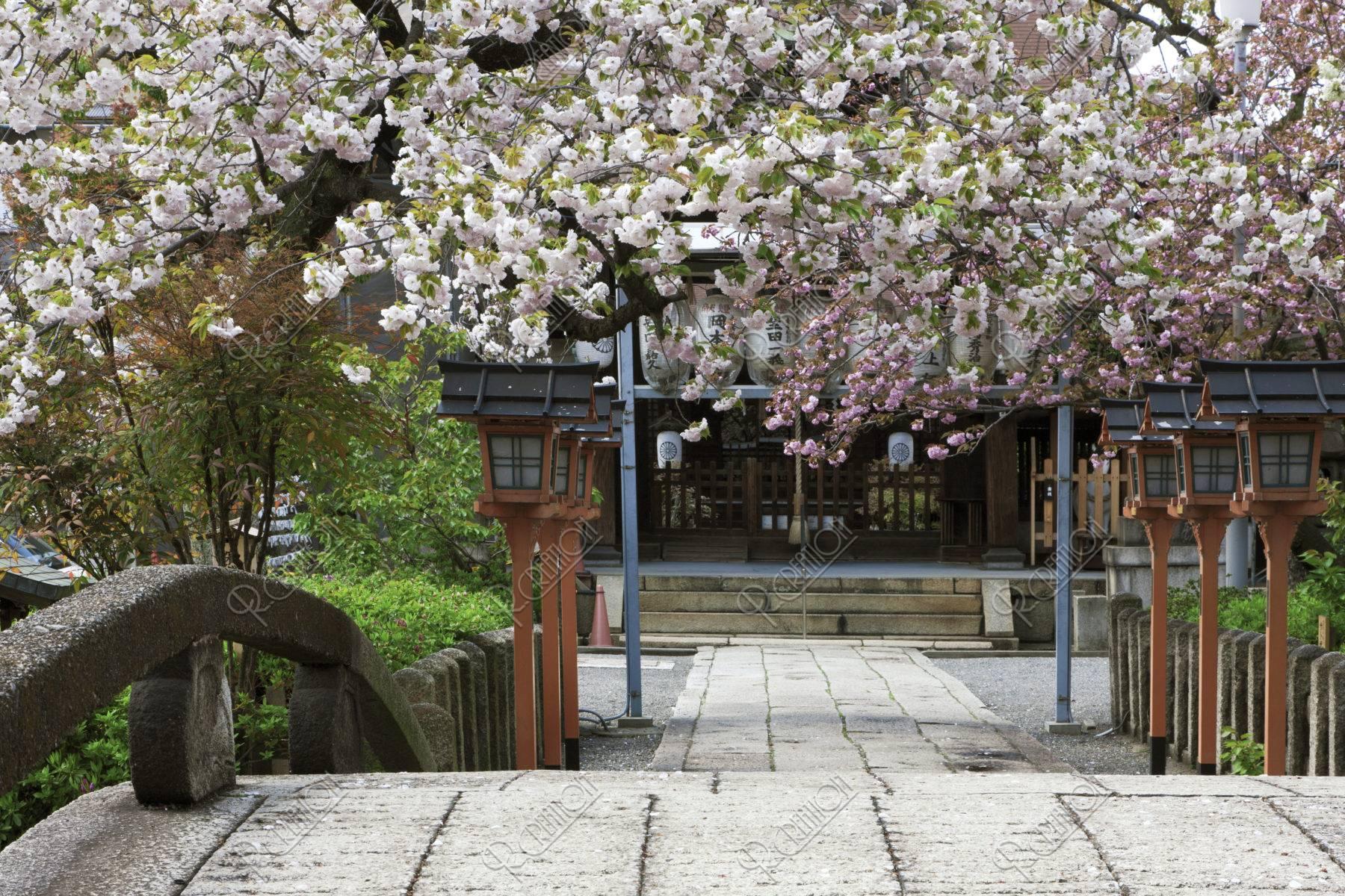 六孫王神社 桜