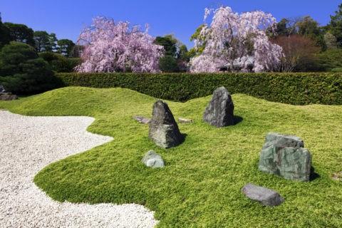 楽水苑 桜