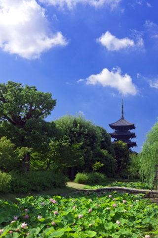 ハスと東寺 世界遺産