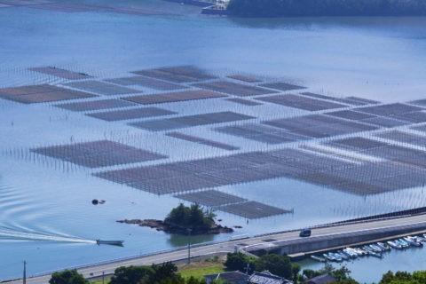 五ケ所湾 海苔ひび