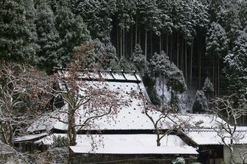 雪の茅葺きと柿